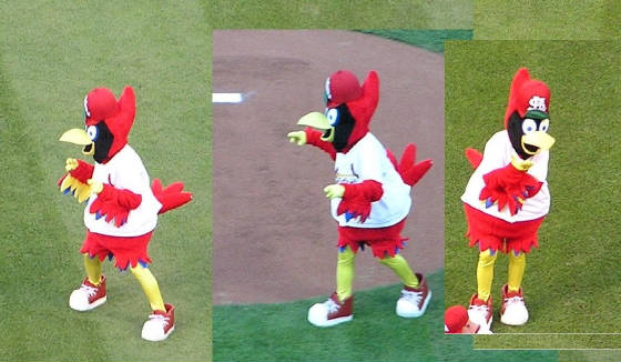 Fredbird - The Cardinals mascot - St. Louis